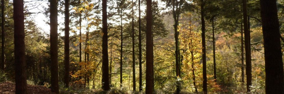 Access to acres  of woodland walks